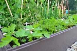 Dagi aed aedvili