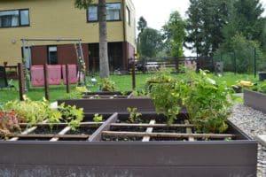 Dagi aed köögiviljad