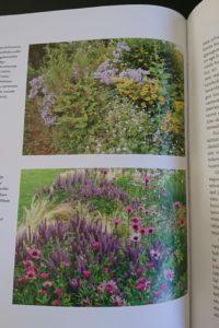 Dagi aed moodne maastik