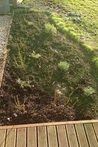 Dagi aed lehed ära