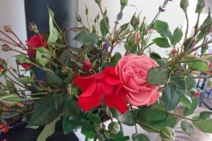Dagi aed roosid vaasis 1