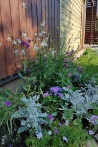 Dagi aed suvelillepeenar