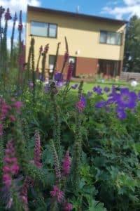 Dagi aed kurereha ja kassisaba