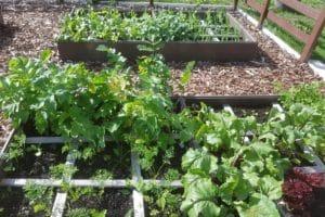 Dagi aed peenrakast