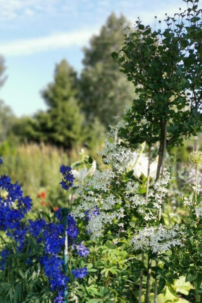 elulõng ja kukekannus